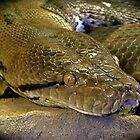 golden eye by mamba