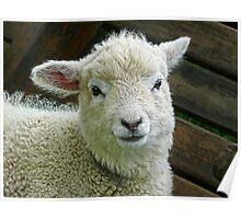 Gentle Lamb Poster