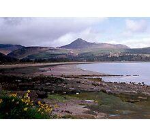 Daffodils, Isle Of Arran, Scotland Photographic Print