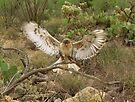 Ferruginous Hawk ~ Kachina Dreams by Kimberly Chadwick