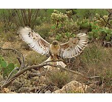 Ferruginous Hawk ~ Kachina Dreams Photographic Print