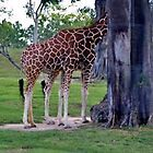 Giraffe with Six Legs by longaray2