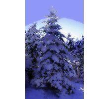 Nature's Christmas Photographic Print