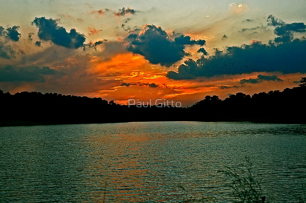 Time Flies and So do Birds! by Paul Gitto