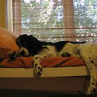 Big day... by Patricia Bier