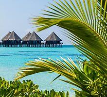 Postcard from Tahiti, French Polynesia by Digital Editor .