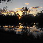 Renmarks sun piercing through the river red gums. by MatrixMan