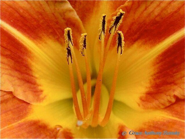 Floral Sunburst by GraceNotes