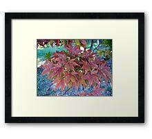 Autumn Bouquet - Maple Framed Print