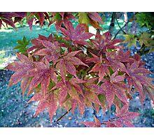 Autumn Bouquet - Maple Photographic Print