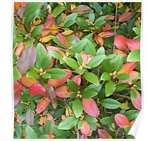 Autumn Bouquet - Rhododendron Poster