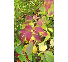 Autumn Bouquet - Forsythia Photographic Print