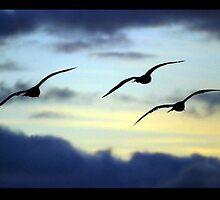 Seagulls At Sunset by KardsRUs