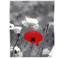 One Red Poppy Poster