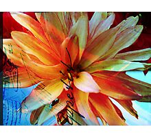 Be My Begonia! Photographic Print