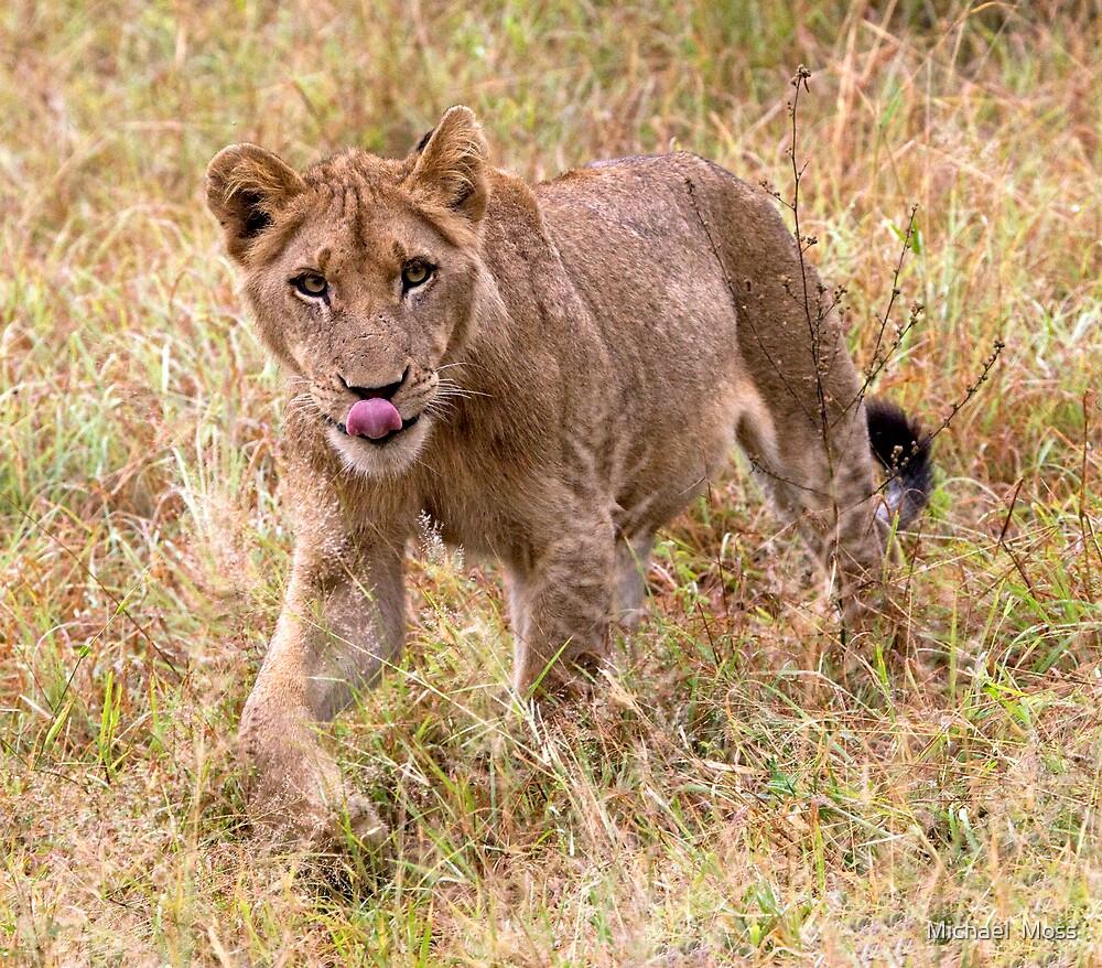 Lion Cub by Michael  Moss