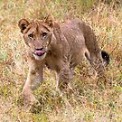 Lion Cub by Michael  Moss