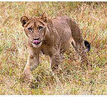 Lion Cub Photographic Print