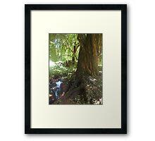 Willow Stream 1 Framed Print