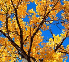 Jemez Cottonwood by TheBlindHog
