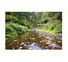 rainforest stream Art Print