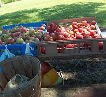 Roadside Apple Stand by sandycarol