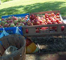 Roadside Apple Stand by sandycarol