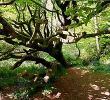 Scary Tree In Cornish Buebell Glade by Mike Honour