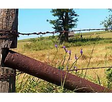 Barbed Wire Beauty Photographic Print