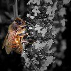 B&W Bee by Josie Jackson