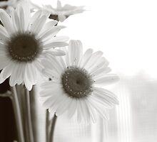 Daisies by Jodi Turner