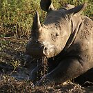 Mud bath by Tara Pirie