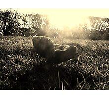 First Light Photographic Print