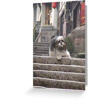 Shaggy Dog  on steps Greeting Card