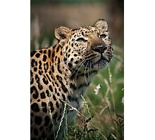 Leopard in the Light Photographic Print