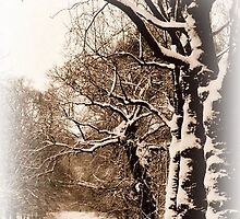 Trees in Sepia - Greenwich Park by Karen Martin