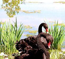 Black Swans at Lebanon Valley College by Hope Ledebur