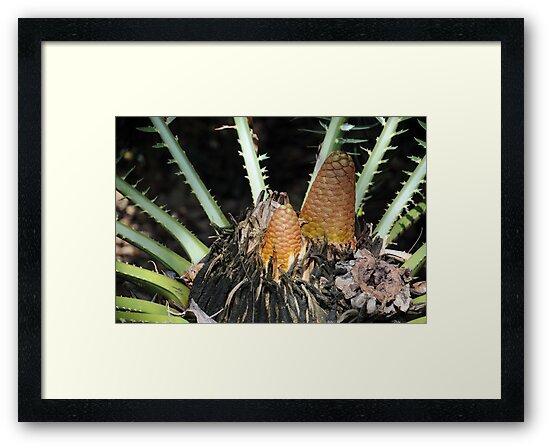 Encephalartos pterogonus by TaiHaku