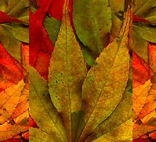 Autumn Collage by Tibby Steedly