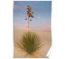 White Sands Yucca at Dawn Poster