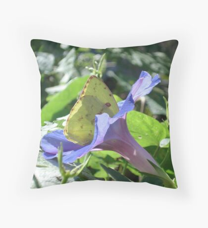Sulphur Butterfly  in Morning Glory 2 Throw Pillow