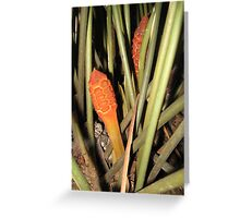 Zamia amblyphyllidia Greeting Card
