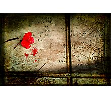Crimson solitude Photographic Print