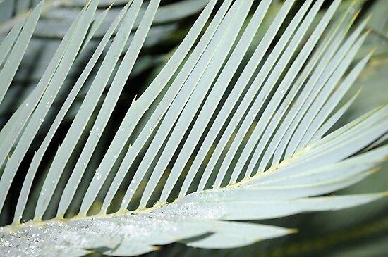 Encephalartos princeps by TaiHaku