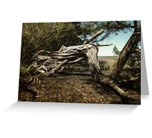 gnarled and twisty Greeting Card