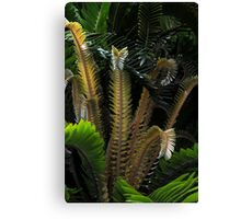 Encephalartos woodii Canvas Print