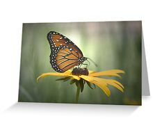 Monarch on a Daisy Greeting Card