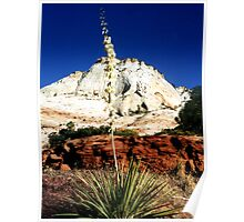 Zion Yucca Poster