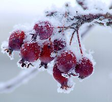 Frozen berries by Philippe Widling