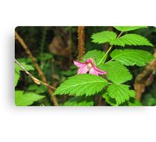 Blackberry Blossom Canvas Print
